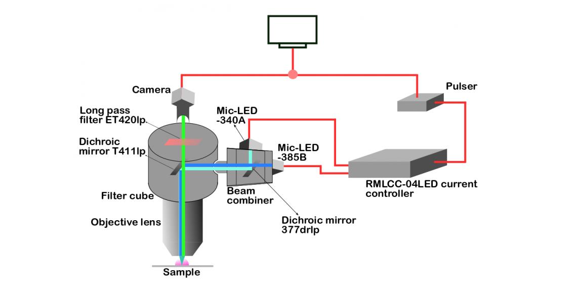Dynamic ratiometric imaging enabled using Prizmatix LEDs