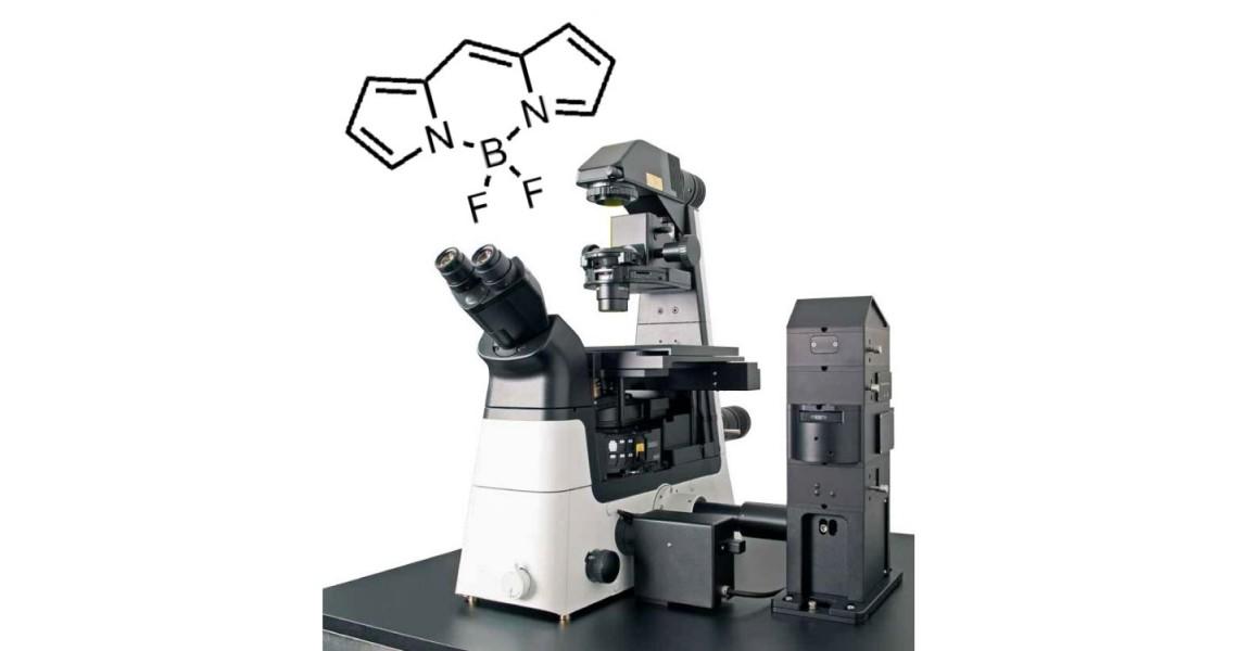 In-vitro temperature measurement using FLIM